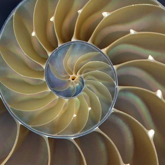 Mondes intérieurs : La spirale