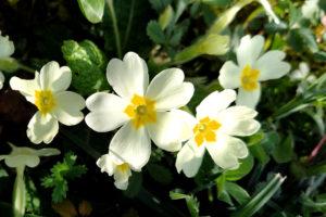 Le Foie et le printemps